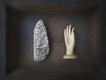Devonian Drawer - Coral Art Murphy
